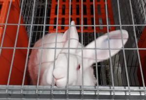 В Ленинградской области открылась кролиководческая ферма «Волховский кролик»