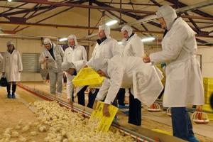 В Липецкой области состоялся запуск первой очереди птицеводческого комплекса «Елецпром»