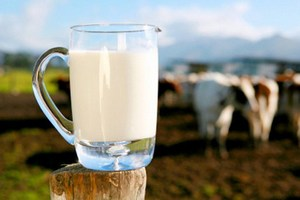Производители молока ЕС могут временно поднять цену на свою продукцию