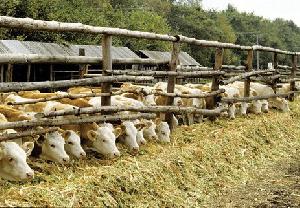 Свыше 20 животноводческих ферм построили в 2017 году в Дагестане