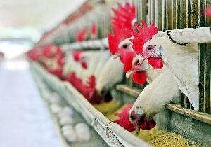Глава Азербайджана ознакомился с фабрикой по производству птичьего мяса