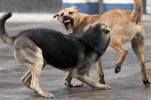 В Оренбуржье отмечены факты нападения бродячих собак на домашний скот
