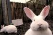 В Пензе обсуждают перспективы развития кролиководства
