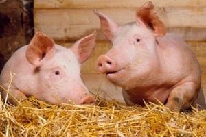 Управление ветеринарии подтвердило уровень биологической защиты агрофирмы «Красная Звезда» в Вологодской области