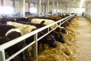 К 2020 году Воронежская область планирует удвоить производство мяса