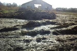 Сельхозпредприятия Погарского и Почепского районов Брянской области обязали за неделю избавиться от биологических отходов