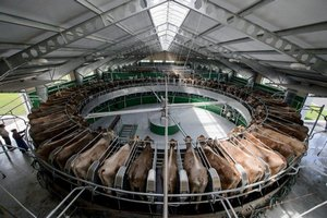 Под Калугой открыли одну из крупнейших в Европе роботизированных ферм