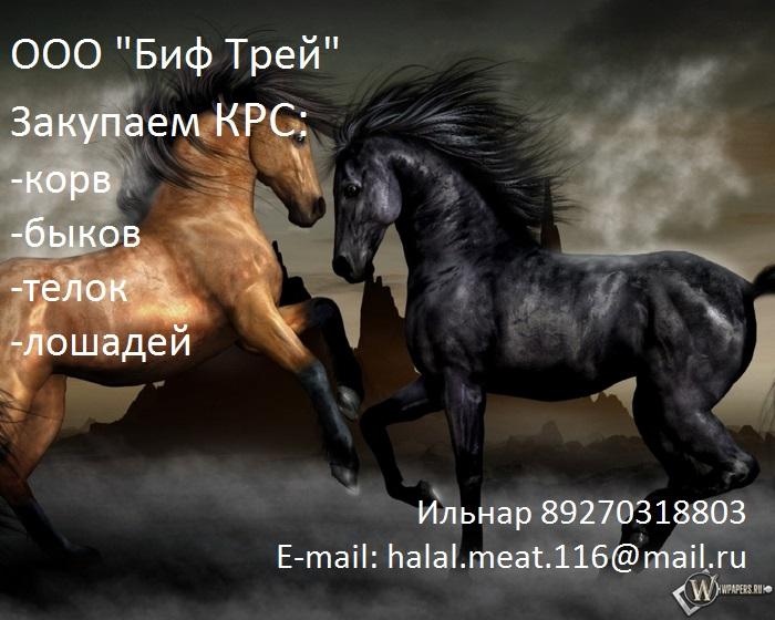 Закупаем КРС живым весом (Коров,быков,лошадей)