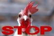 Белоруссия ограничивает ввоз птицы из трех областей РФ из-за птичьего гриппа