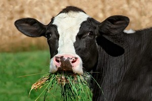 В Казахстане строится комплекс для откорма 10 тысяч крупного рогатого скота