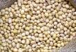 «Амуркормопродукт» займется поставками соевой продукции для животноводства белорусского АПК