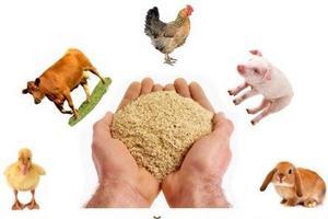 ЕС задумался об альтернативе соевым бобам из Южной Америки в кормопроизводстве