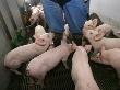 """""""Прибалтийская мясная компания три"""": 120 человек уведомлены об увольнении"""