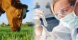 На Вологодской области начнут проводить ДНК-диагностику крупного рогатого скота