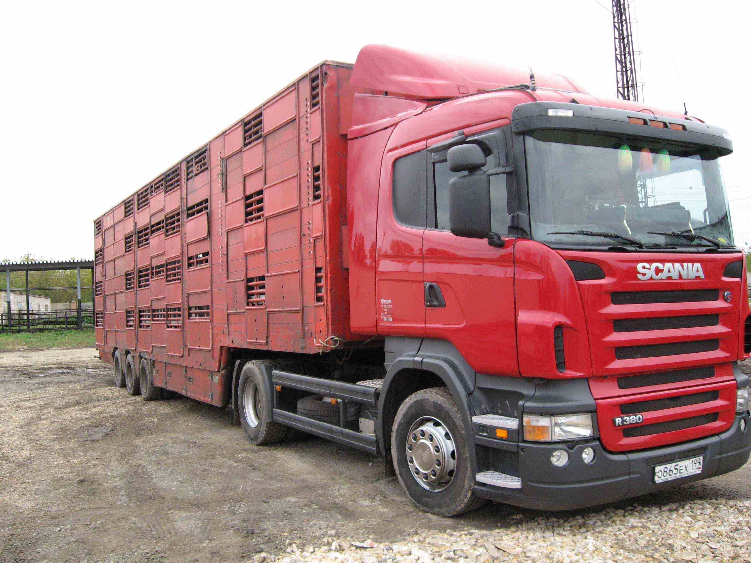 Перевозка животных импортными скотовозами