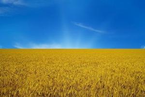Павленко: Украина отказалась от партнерства с Россией в аграрной сфере