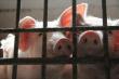 МЭР: Решение ВТО по спору РФ и ЕС по импорту свинины не ослабит защиту от АЧС