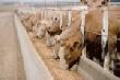 Мясо: каковы перспективы ценообразования для инвесторов?