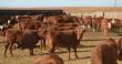Калмыкия начнет поставки сельскохозяйственных животных в Иран в 2019 году