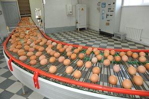 90% экспорта яиц РФ — это яйца произведённые в Ленинградской области