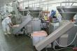 Бывшие чиновники Ленобласти вложат 100 млн рублей в мясокомбинат