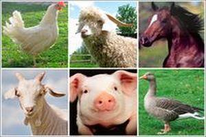 Подведены итоги развития животноводства в Тюменской области