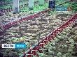 За вакансиями на пензенскую птицефабрику «Васильевская» выстраиваются очереди