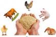 В Башкортостане разработан рецепт кормовой добавки на основе дешевого сырья