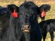 Брянские фермеры перенимают опыт у ковбоев