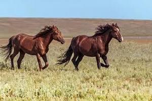Минсельхоз Республики Татарстан организует курсы по развитию коневодства