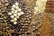 Экстракт хмеля в комбикормах может улучшить качество мяса птицы