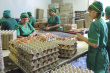Ростовская фабрика займется повышением производительности труда