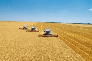 Минсельхоз планирует до конца года закупить 1,5 млн тонн зерна