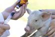 В  украинской Госпродпотребслужбе не подтвердили массовое использование антибиотиков в мясной продукции