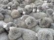 На Ставрополье заявили о 60%-ном росте производства баранины