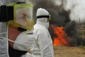 В Крыму сожгут 1,6 тыс. инфицированных туш свиней