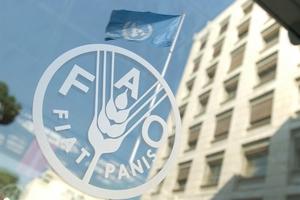 ФАО: в текущем году производство свинины в глобальном масштабе вырастет на 1,9%