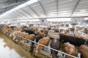 Хозяйства Чарышского района Алтайского края создали и обновили более 1500 скотомест