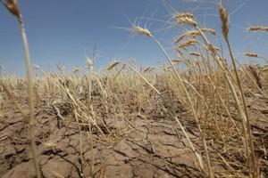 В Бурятии из-за засухи пострадало 122 хозяйства