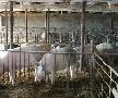 Рейд по свиноводческим хозяйствам