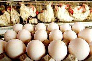 Астраханский Россельхознадзор ввел запрет на ввоз продукции птицеводства из Баварии