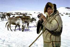 На Ямале 15 380 оленей привили от сибирской язвы