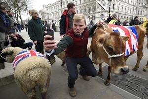 Протестующие фермеры провели по центру Лондона овец и коров
