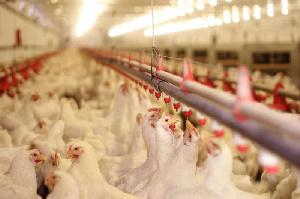 В 2020 году птицефабрика «Рефтинская» получила ₽8,6 млн чистой прибыли
