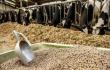 Kondo Shoten вложит $40 млн в производство в Приморье сельхозкормов для Японии