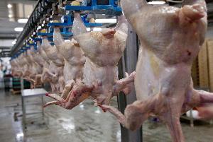 Россия начала поставки мяса птицы в Китай