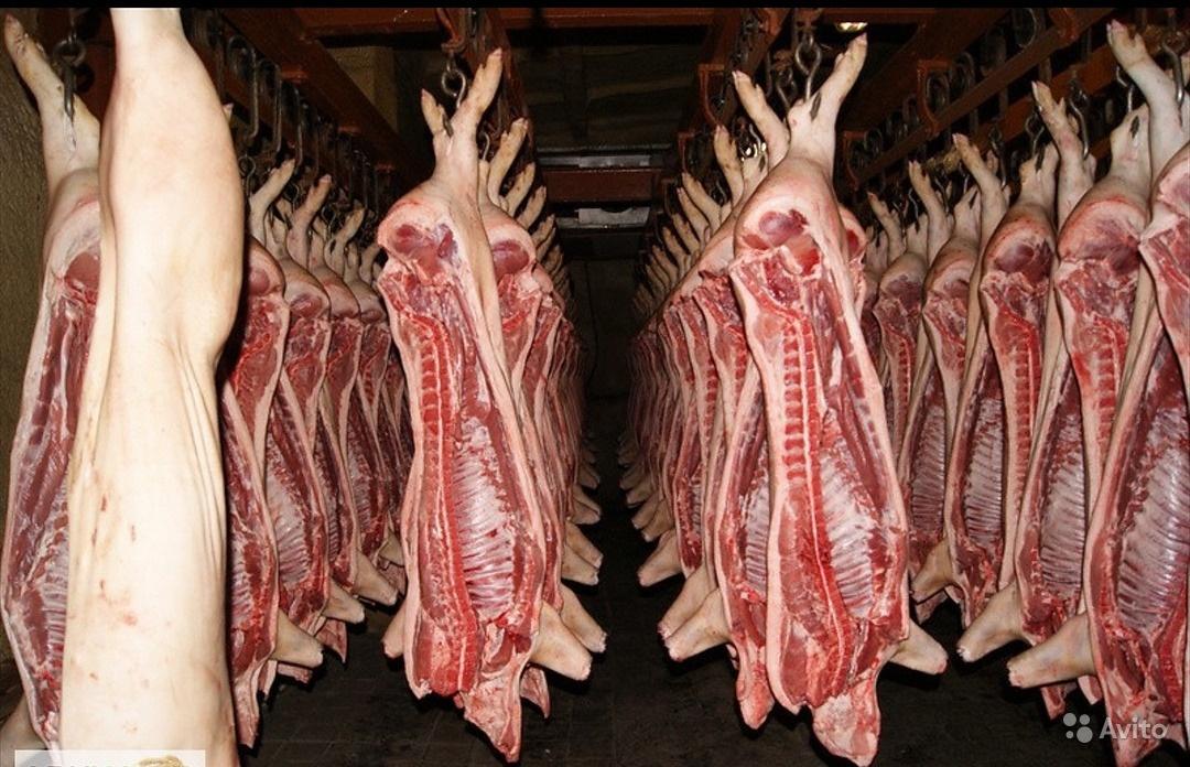 свинина полу тушками