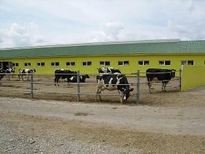 Площадки для откорма скота создают в Тарбагатайском районе Восточно-Казахстанской области