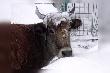 Тюменские животноводы готовятся к зиме