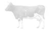 Калининградский центр племенного животноводства